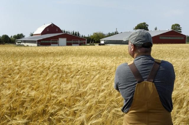Профессия Агроинженер: особенности, обучение и востребованность, где и как работать?